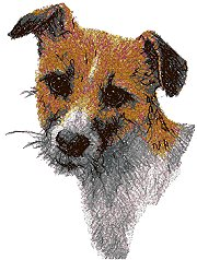 Jack Russell Terrier (Parson Russell Terrier)