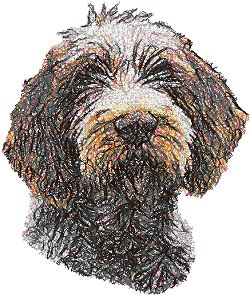 Spinone Italiano (Italian Pointer) II