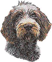 Spinone Italiano (Italian Wire-haired Pointer)