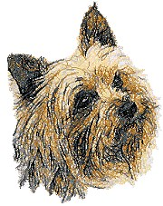 Yorkshire Terrier II