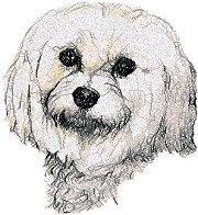 Maltese (Maltese Lion Dog)