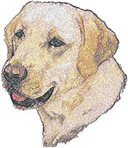 Labrador Retriever (Yellow Lab)