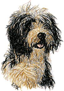 Bearded Collie (Beardie)