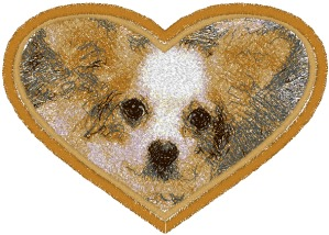 Chihuahua in a Heart