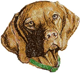Vizsla II (Hungarian Pointer)