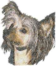 Chinese Crested Dog (Hairless)