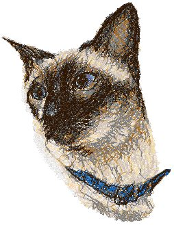 Siamese Cat with Blue Collar