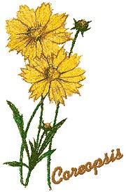 Garden Flower Series: Coreopsis