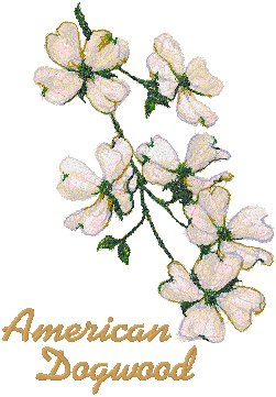 Trees in Blossom Series: American Dogwood
