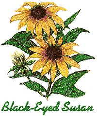 Garden Flower Series: Black-Eyed Susan
