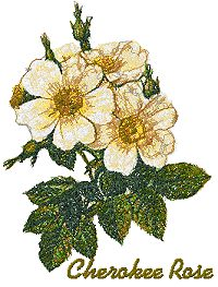 Wild Flower Series: Cherokee Rose