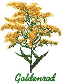 Wild Flower Series: Goldenrod