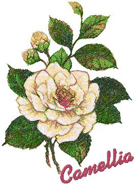 Garden Flower Series: White Camellia