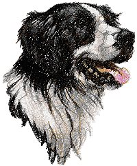 Border Collie (Scottish Sheepdog)