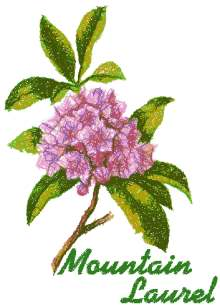 Trees in Blossom Series: Mountain Laurel