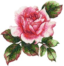 Pink Heart Rose