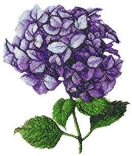 Advanced Embroidery Designs Hydrangea