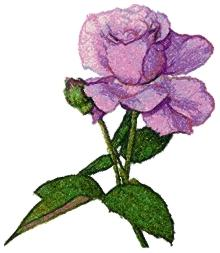 Lavender Beauty Rose