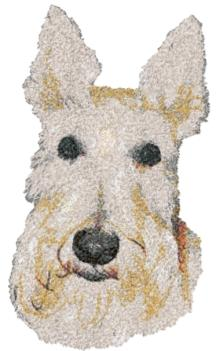 Wheaten Terrier (Soft-Coated Wheaten Terrier)