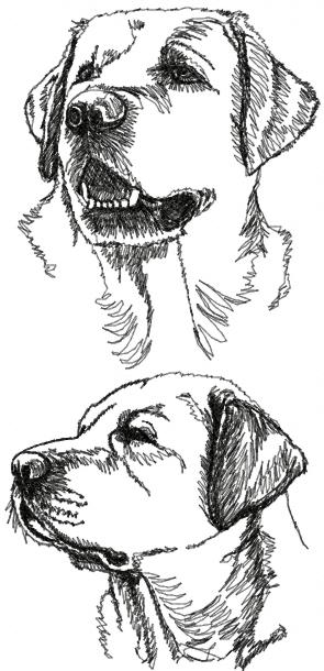 yellow lab coloring pages - photo#35