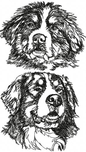 Advanced Embroidery Designs Bernese Mountain Dog Set
