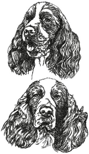 English Springer Spaniel Set