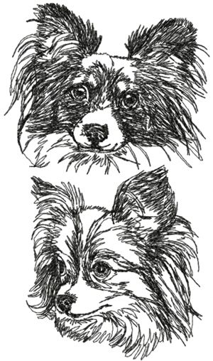 Papillon Set (Continental Toy Spaniel)