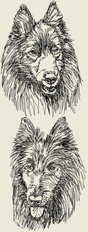 Belgian Sheepdog Set
