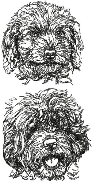 Advanced Embroidery Designs Labradoodle Set