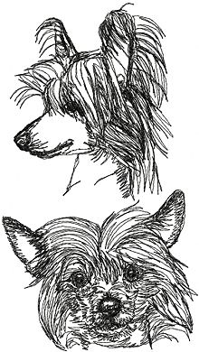 Chinese Crested Dog Set