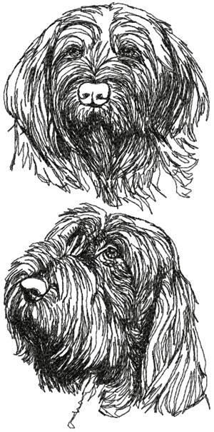 Spinone Italiano (Italian Wire-haired Pointer) Set