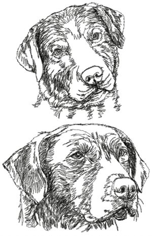 Chesapeake Bay Retriever Set