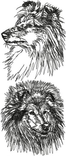 Collie (Rough Collie) Set