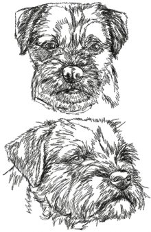 Border Terrier Set