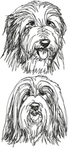 Bearded Collie Set