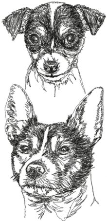 Tenterfield Terrier Set