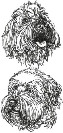 Wheaten Terrier Set (Soft-Coated Wheaten Terrier)