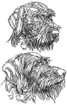 German Wirehaired Pointer Set