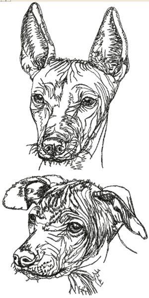 Xolo Dog Embroidery Design