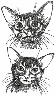 Abyssinian Cat Set
