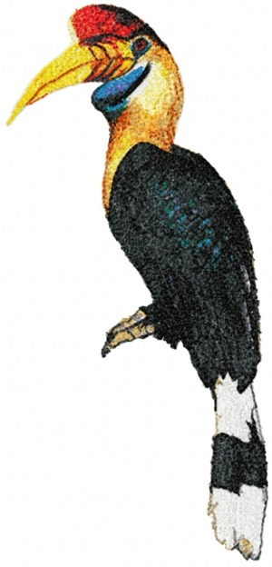 Great Hornbill (Calao Bird)