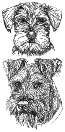 Schnauzer with Uncropped Ears Set
