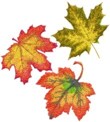 Autumn Maple Leaf Set