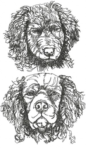 Curly Coated Retriever Set (Curly Set)