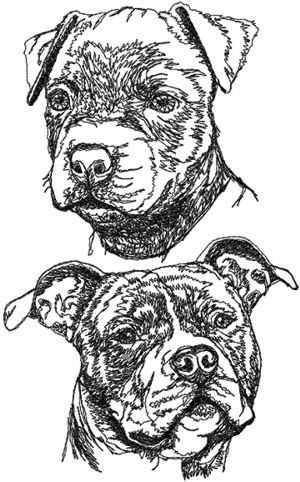 American Staffordshire Terrier (Staffy) Set