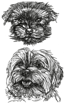 Yorkshire Terrier (Yorkie) Set