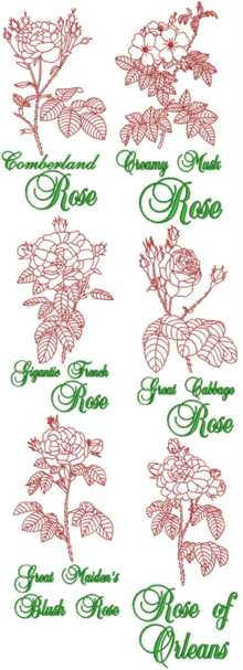 Garden Rose Redwork Set II