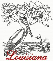 Louisiana: Brown Pelican