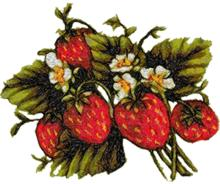 Midsummer Strawberries