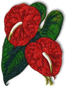 Anthurium (Flamingo Flower)